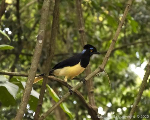 DSC6077 - Iguazu